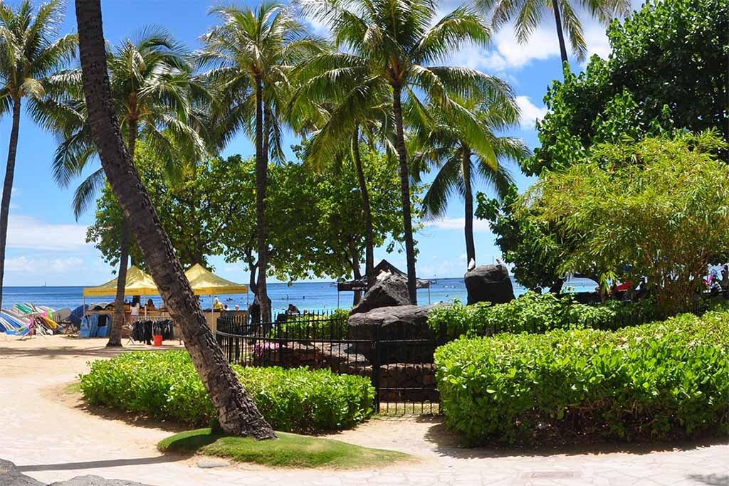 Hawaii - Beach and Palm Trees